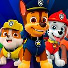 Những chú chó cứu hộ