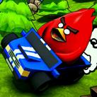 Chim điên lái xe